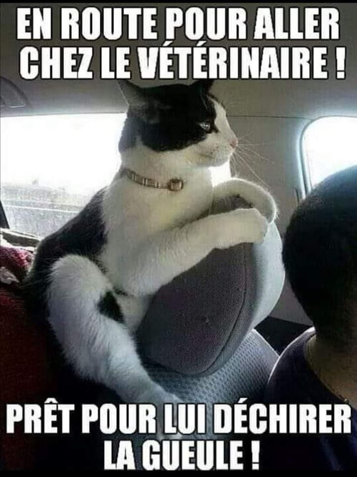Chats alors !!! - Page 2 Chat-v-to-56f6f50