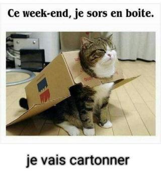 Chats alors !!! - Page 2 Sortie-en-boite-571df70