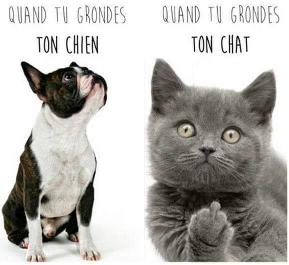 Chats alors !!! Chat-chien-56f6f20